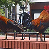 YBOR CITY'S  COLORFUL ROOSTERS IN A LOCAL PARK.