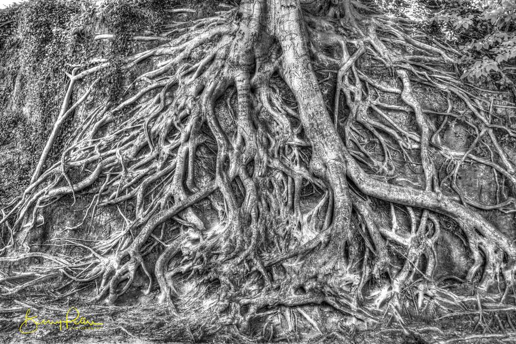 Falls Park Roots