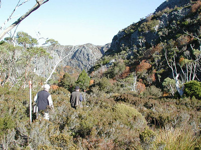So the next morning we took off for Cradle Mountain - last chance to see the Fagus in color this year!