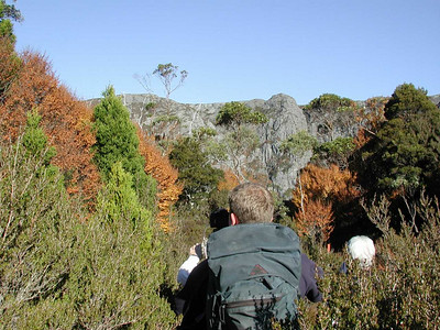The bushwalk to Crater Lake is the first leg of the Overland Track