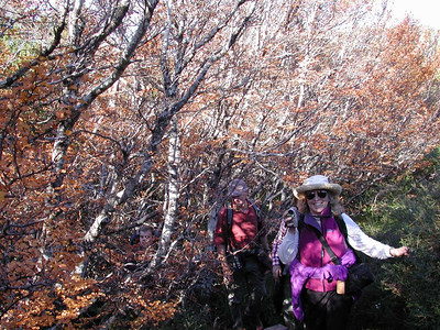 On Mt. Field, Genevieve told us she had just returned from Cradle Mountain - that the Fagus were in glorious color.