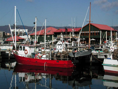 Some of the fishing fleet in Victoria Dock next to us. Mures Seafood Center is the green building - yummy!