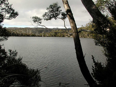 Mt. Field, Eagle Tam