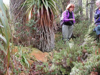 Genevieve, Panadani and sphangnum moss
