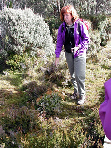 Genevieve Gates, Ph.D., University of Tasmania, field lecturing on her sphagnum moss research area