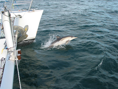 Dolphins in Tasman Bay, New Zealand