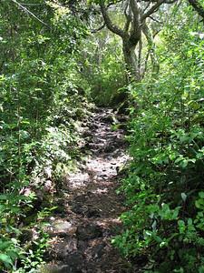 Moist forest on Rangitoto Island