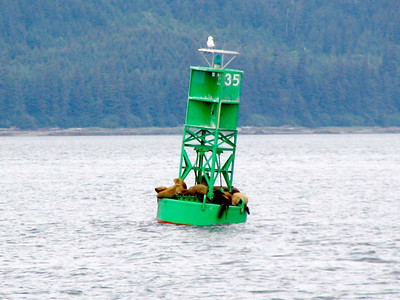 Sealions or seals on buoy in Chatham Strait