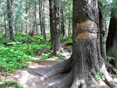Artists have carved native Indian symbols into the trees of the forest trail along the Mendenhall River
