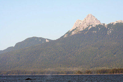 Approaching Prince of  Wales Island,  we spot another humpback whale right in front of Mt. Calder.