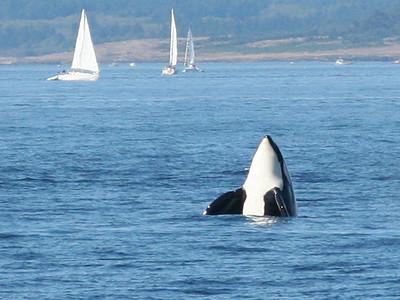 Victoria Orcas