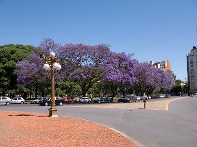 Jacaranda trees near the Monumento a Jose' de San Martin' de San Martin