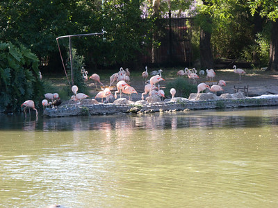 Flamingos at the Jardin Zoologico