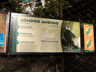 There was an Andean Condor in the cage, but it was crouched between two rocks, with only its back and top of its head visible.