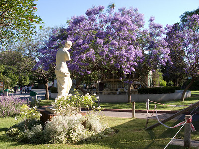 Jacarandas and statue at the Zoo