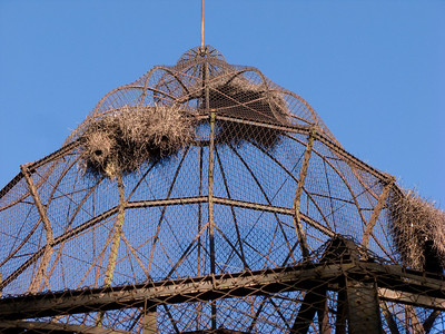 Nests built by green parrots on the top of the Condor's cage.
