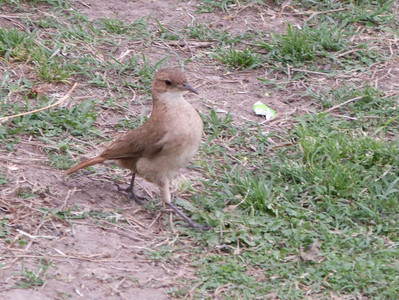 We are still trying to identify this friendly bird.