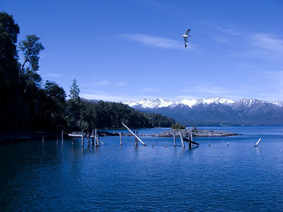 On a peninsula in the lake Lago Nahuel Huapi, is the Bosque de Arrayanes. Our boat landed near here.