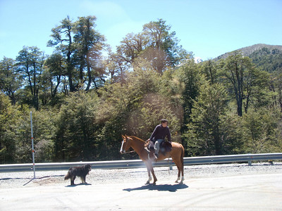 This horseman and his dog had come to see an overturned truck and all of its contents spilled onto the road.