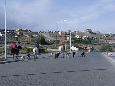As we drove along the new waterfront esplanade, a group of horses and their dogs led the way.