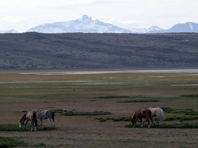 Horses on the plains near the ecological reserve in El Calafate, Argentina