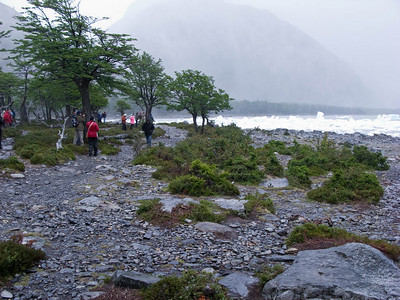 The forest of Lenga (notofagus southern beech) trees had been tortured by winds and ice.