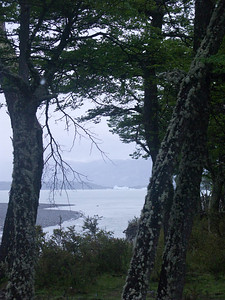 View of Bahia Onelli from the forest.