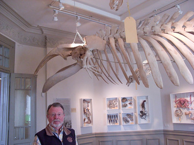 Puerto Madryn: Museum of Man and the Sea