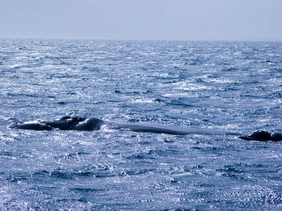 The whale on the left is the mother. The smaller on on the right is the baby.