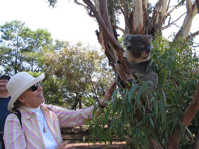 Dorothy found the koala fur rather stiff.  What a peaceful animal.