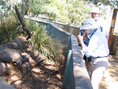 Look closely in the left of the photograph and you will see the Baby wombat that Betsy and Lester and photographing.