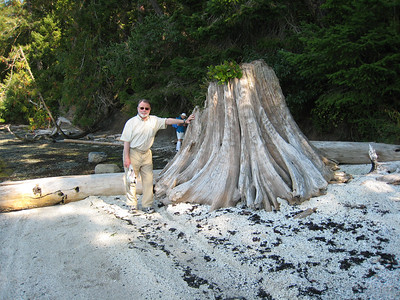 Steve with driftwood that has washed up onto the midden shell beach of Grays Peninsula.