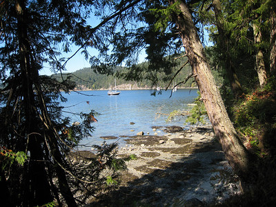 View from the forest trail at Montague Harbour Marine Pdark