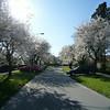 2009-04-18_P1010963