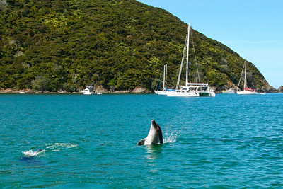 BOI: Whangamumu Dolphins