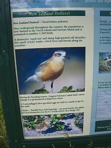 New Zealand Dotterel interpretation - closeup.