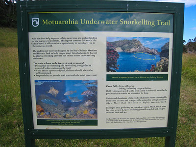The Roberton Island snorkelling trail is in very fishy but protected waters - just a couple of meters from the open Bay of Islands lagoon waters.