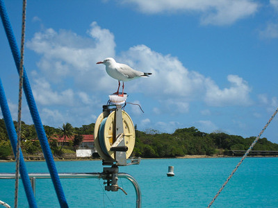 Heh. This gull thinks Dorothy's sea gull repeller makes a fine perch!