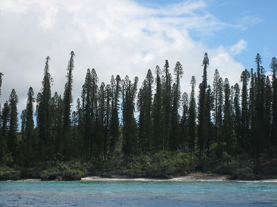 The beautiful, pristine shoreline of the Isle of Pines -- coral blocks, white sand beaches and pencil pine forest is very  special.