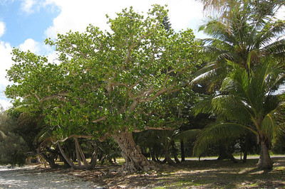 Old, gnarled trees ashore offered shade.