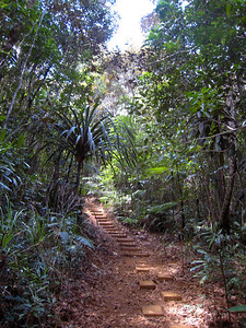We followed this foot path through the forest to the palm tree groves.