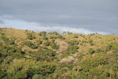 Vegetation on the hills north of Touho