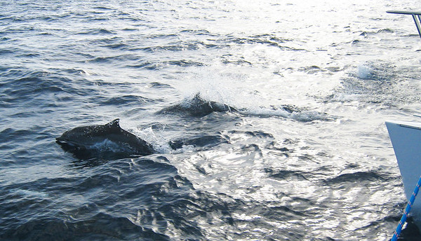 A pod of dolphins raced to play in our bow waves.