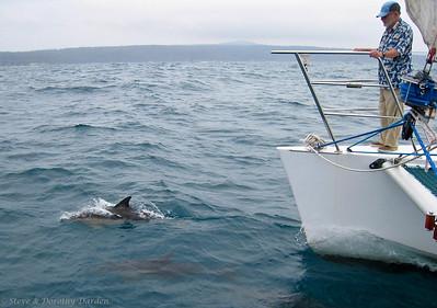 Dolphins Enroute Eden