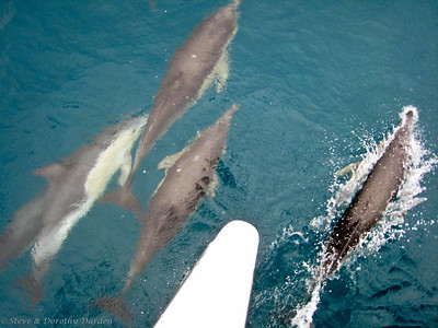 I watched dolphins below me as I stood on the port bow.