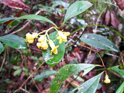 Pretty, yellow forest flowers.