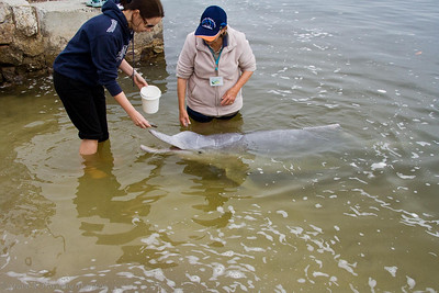 No more than 3 kg of fish were fed to each dolphin each day.