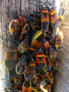 A congregation of insects on the split rail fence