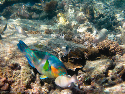 Parrotfish and friends
