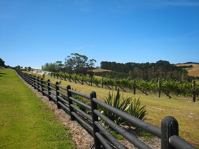 A florishing vineyard covered one hillside.